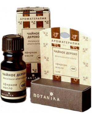 Eteryczny olejek z drzewa herbacianego – Botanika